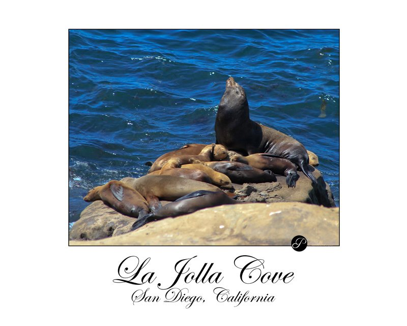 Sea Lions at La Jolla Cove Beach, San Diego, CA