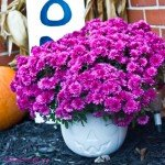 DIY Pumpkin Planter by The Birch Cottage