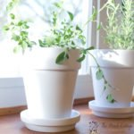 How to paint terra cotta pots with white spray paint