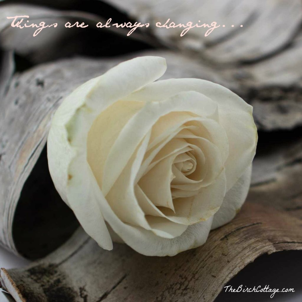 Things are always changing and The Birch Cottage Blog is no exception!