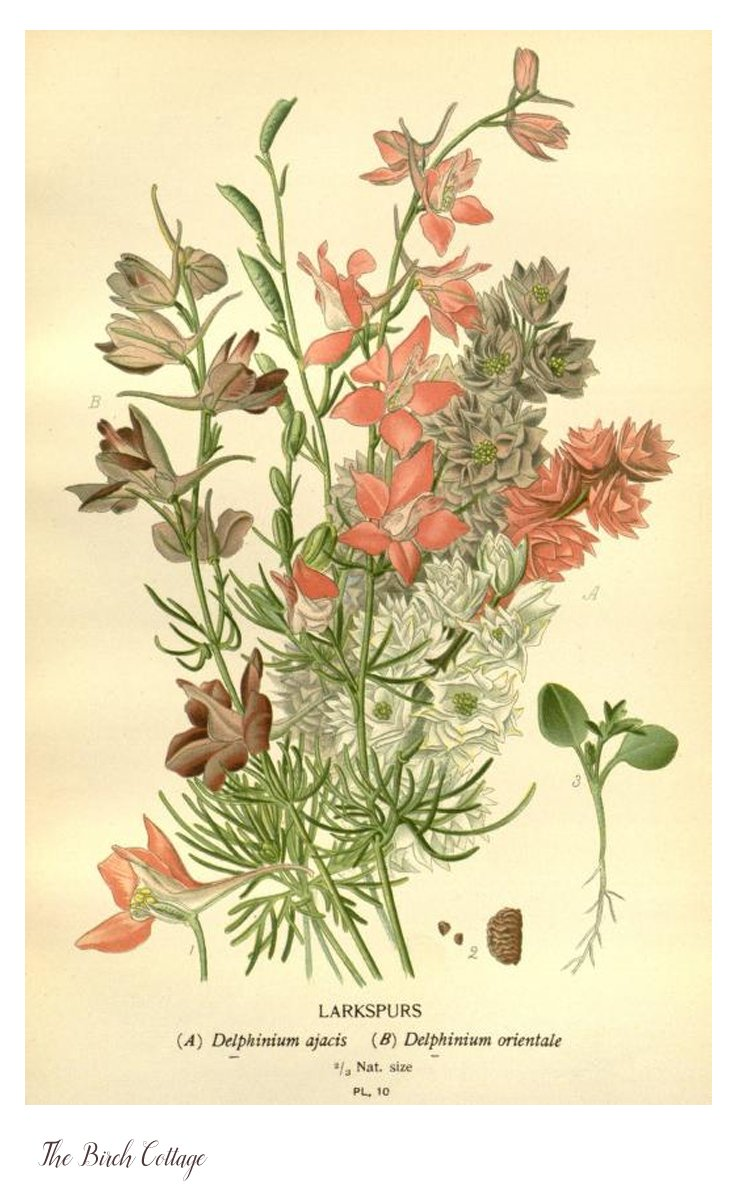 Antique Botanical Prints | Best 2000+ Antique decor ideas