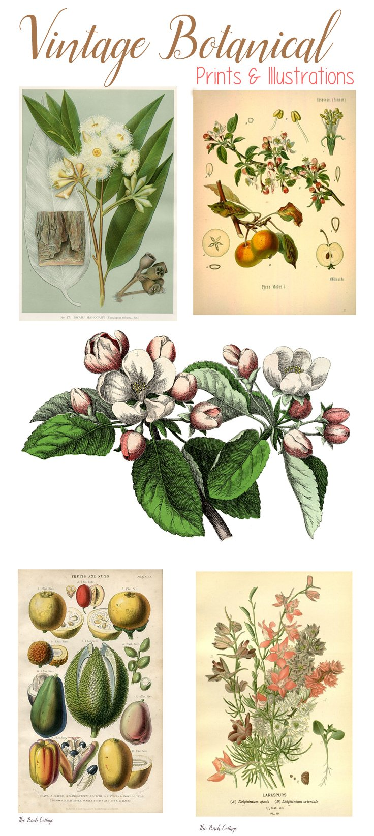Where to Find Vintage Botanical Prints. A list of online resources for vintage botanical prints from The Birch Cottage