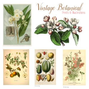 Vintage Botanical Prints and Illustrations – Where to Find Them, Plus 5 Botanical Print Projects