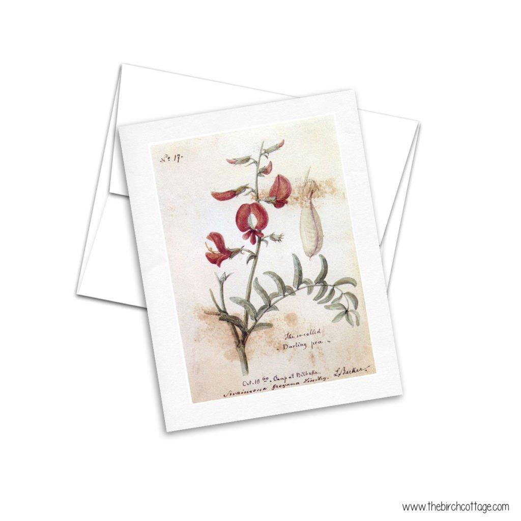 Vintage Botanical Illustrations printable cards from The Birch Cottage