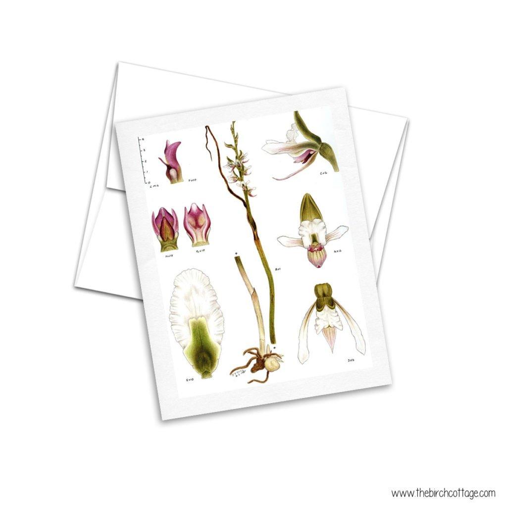 Set 2 - Vintage Botanical Illustrations printable cards from The Birch Cottage