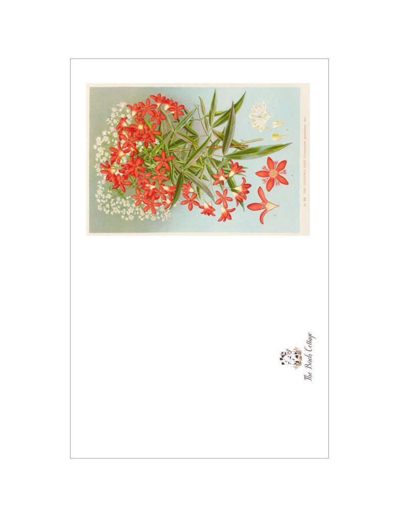 Set 2 - Vintage Botanical Illustrations printable cards from The Birch Cottage