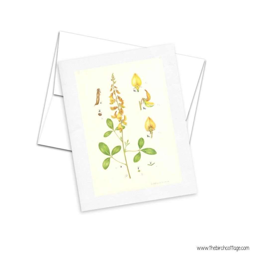 This is the 3rd set of Vintage Botanical Illustration Cards that The Birch Cottage has created especially for her readers.