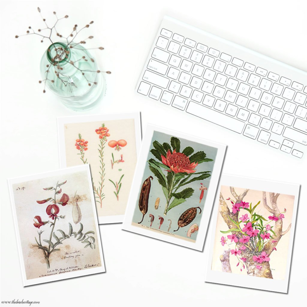 Vintage Botanical Illustrations printable cards from The Birch Cottage