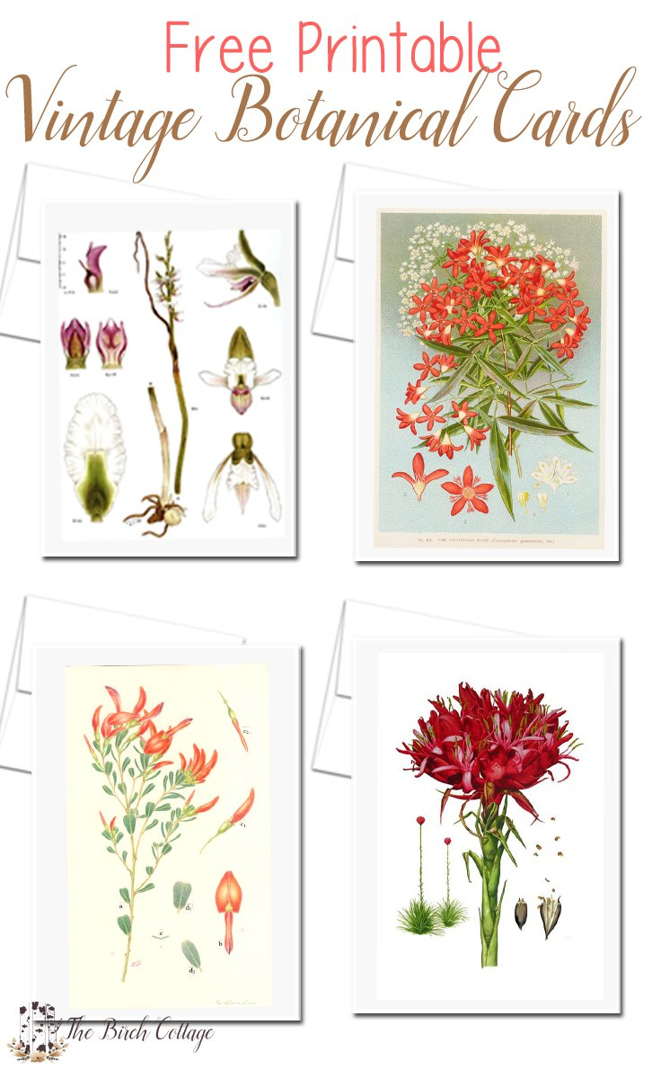 This is a second set of vintage botanical cards from vintage botanical illustrations that you can download and print for free from The Birch Cottage.