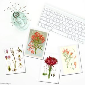 Vintage Botanical Cards from Vintage Illustrations {Set Two}