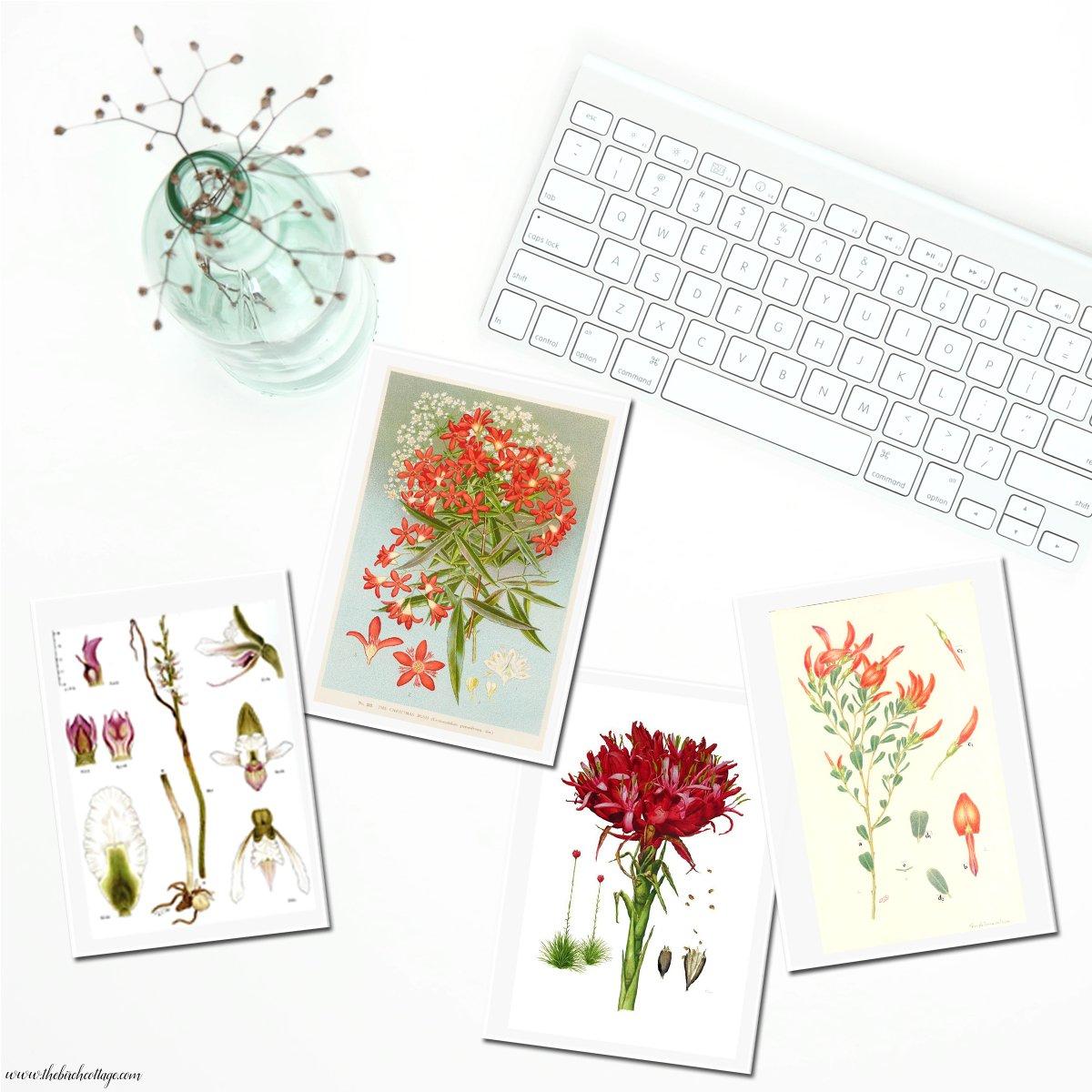 Vintage Botanical Illustrations printable cards from The Birch Cottage. Set 2