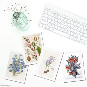 Vintage Botanical Note Cards from The Birch Cottage is the fourth in a series of note cards from vintage illustrations.
