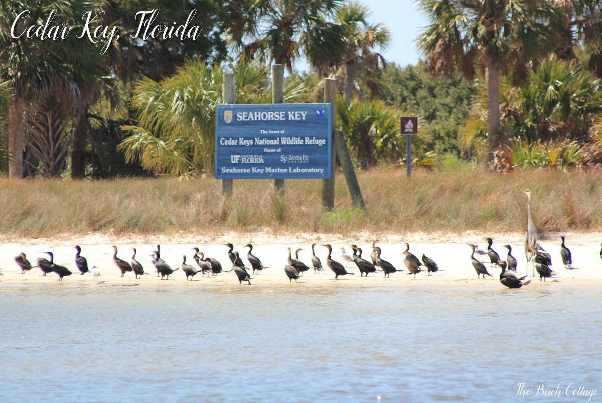 Cedar Key, Florida is for nature lovers. There are plenty of attractions in Cedar Key for nature lovers.