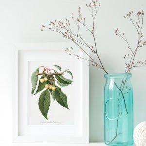 Celebrate the arrival of Spring with these free printable vintage fruit tree Illustrations and Cards from The Birch Cottage!