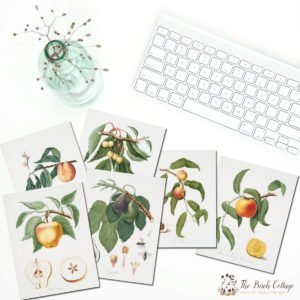 Vintage Fruit Tree Illustrations and Cards to Celebrate the Arrival of Spring!