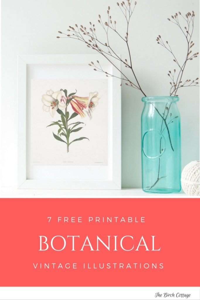 7 Vintage Botanical Illustrations from The Birch Cottage