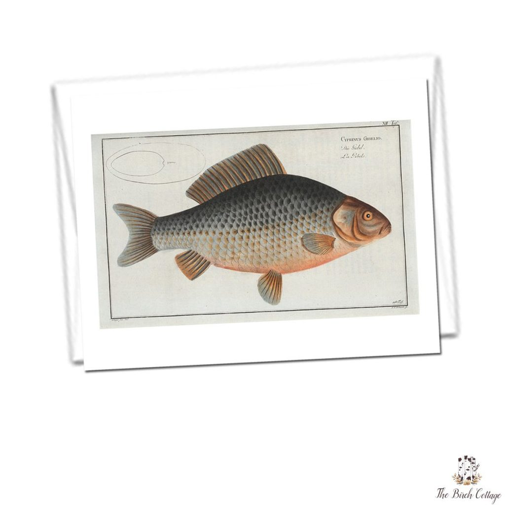 printable fish note cards for dad from vintage illustrations the