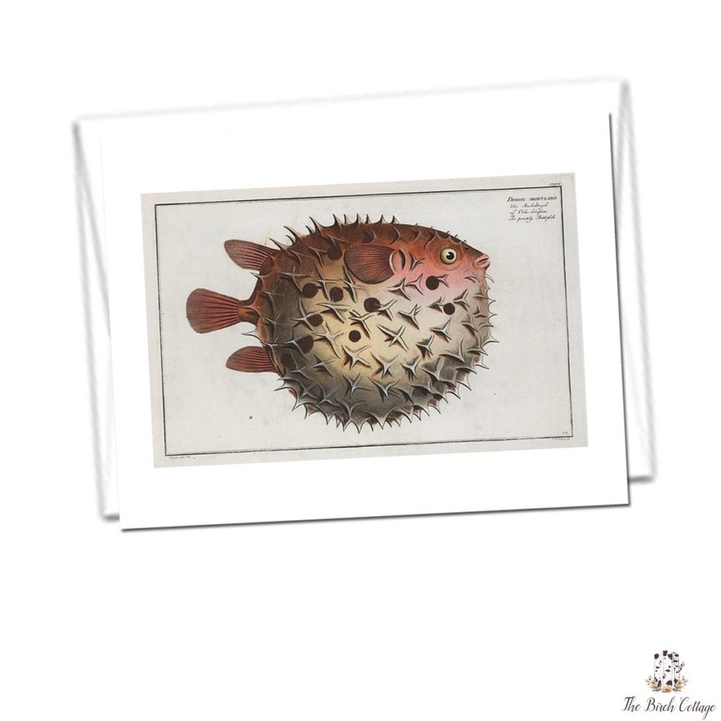 Printable vintage illustration fish note cards are perfect for Father's Day or gifting to all the dads on your gift giving list!