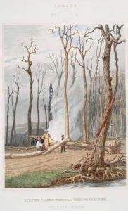 Four Seasons Vintage Illustrations - Spring