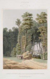 Four Seasons Vintage Illustrations - Summer