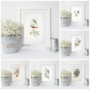 Welcome Spring with 6 Printable Vintage Bird Illustrations