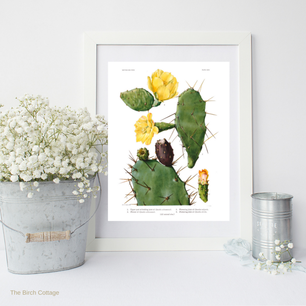 14 Printable Vintage Cactus Illustrations For Your