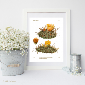 Vintage Cactus Illustrations by The Birch Cottage
