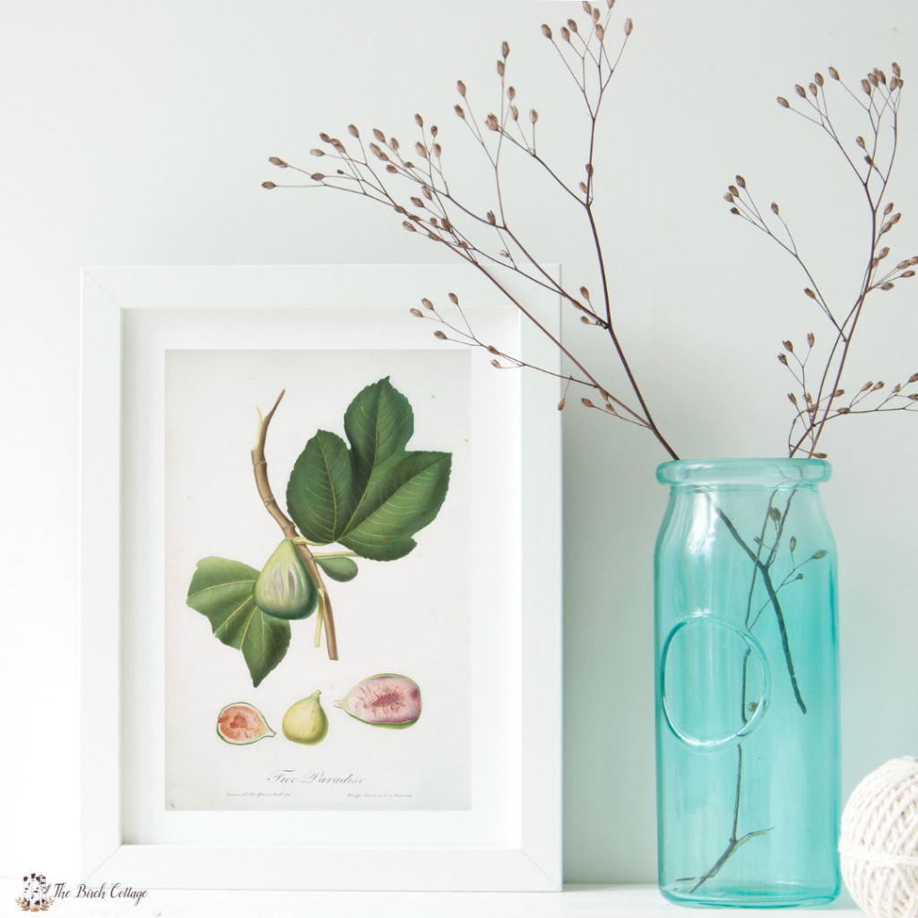 5 Free Fig Vintage Illustrations by The Birch Cottage